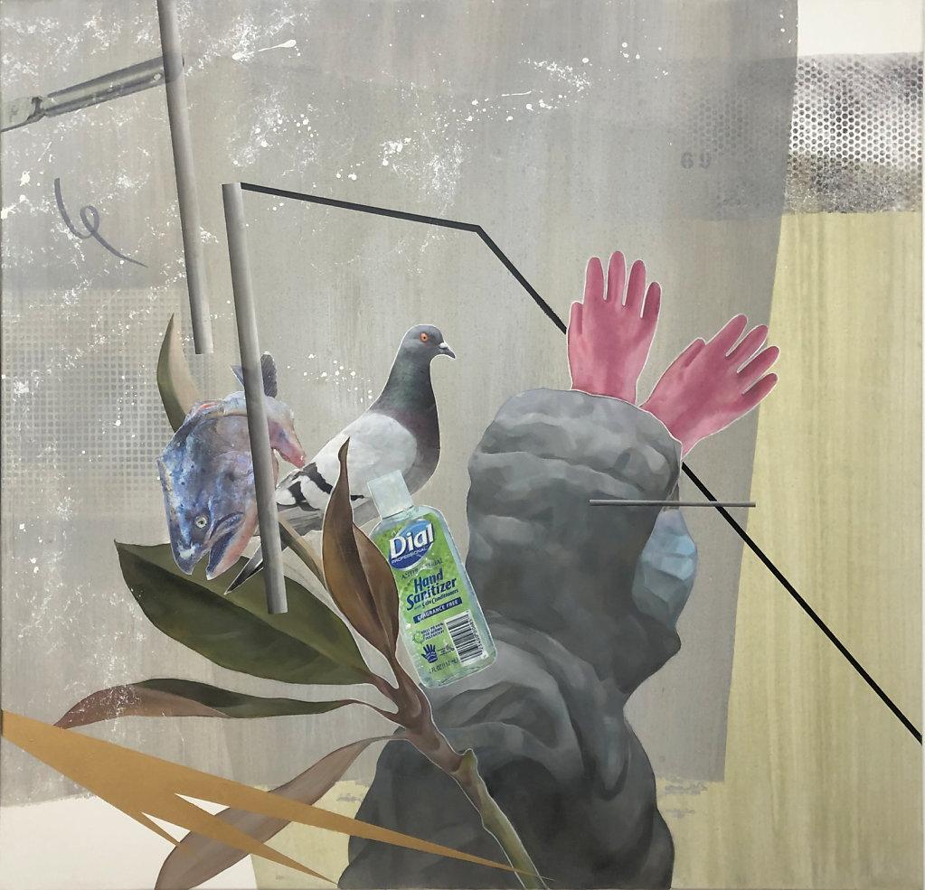 #covid-19 #pigeon